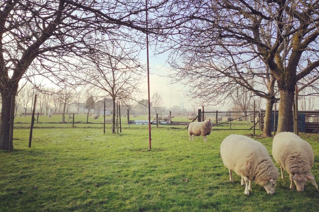 luxueus overnachten op een boerderij