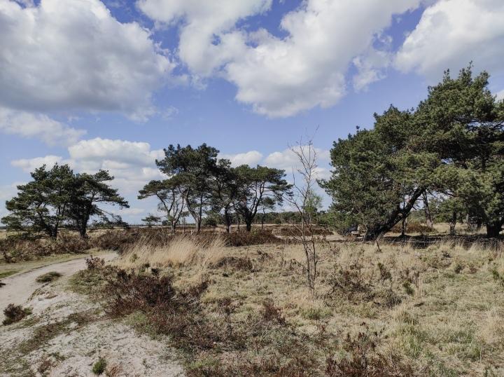De Kalmthoutse Heide: Da's de Afrikaanse savanne inBelgië.